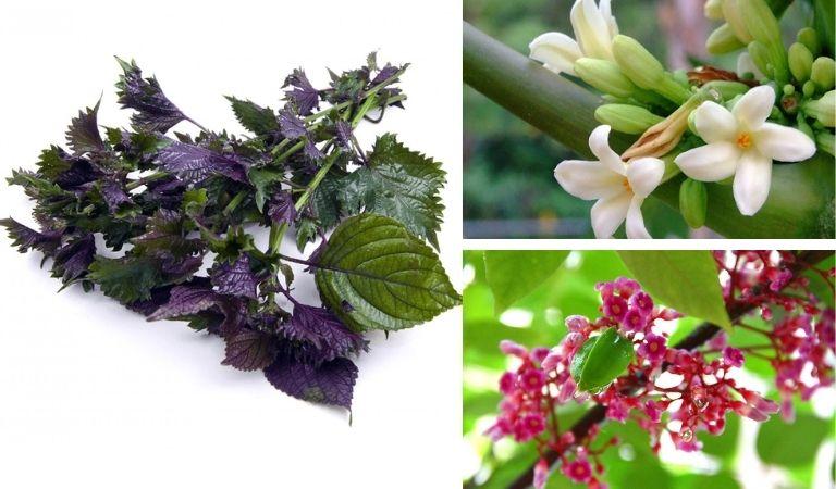 Mẹo chữa bệnh với hoa khế và hoa đu đủ