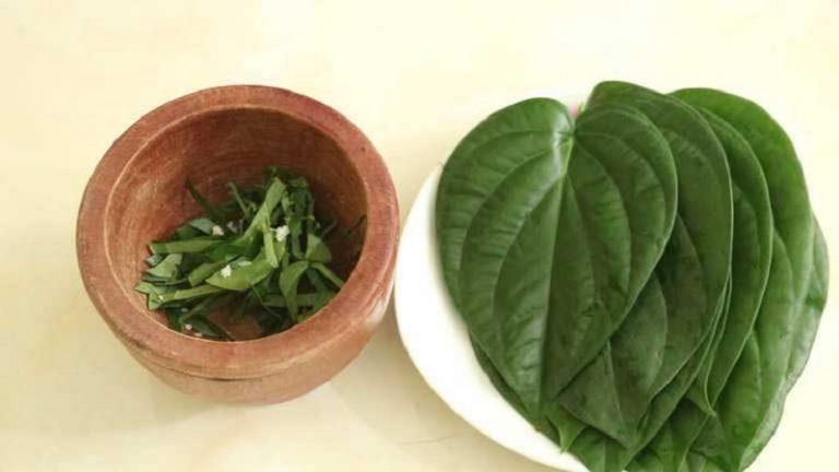 Lá trầu không là một trong những thảo dược được sử dụng để trị viêm họng