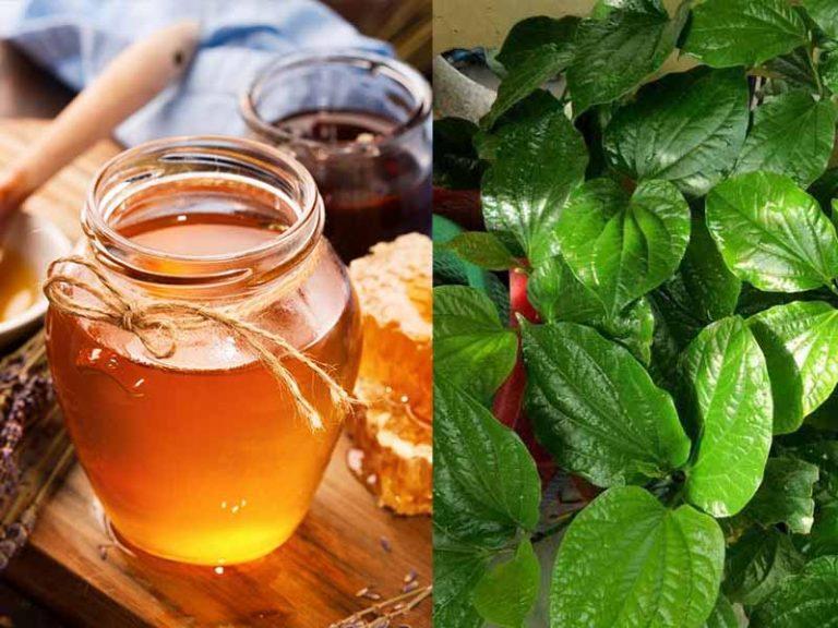 Kết hợp mật ong và lá trầu không chữa viêm họng