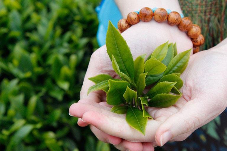 Dùng trà xanh để xông mũi giúp kháng viêm, giảm đau, làm loãng dịch nhầy,...