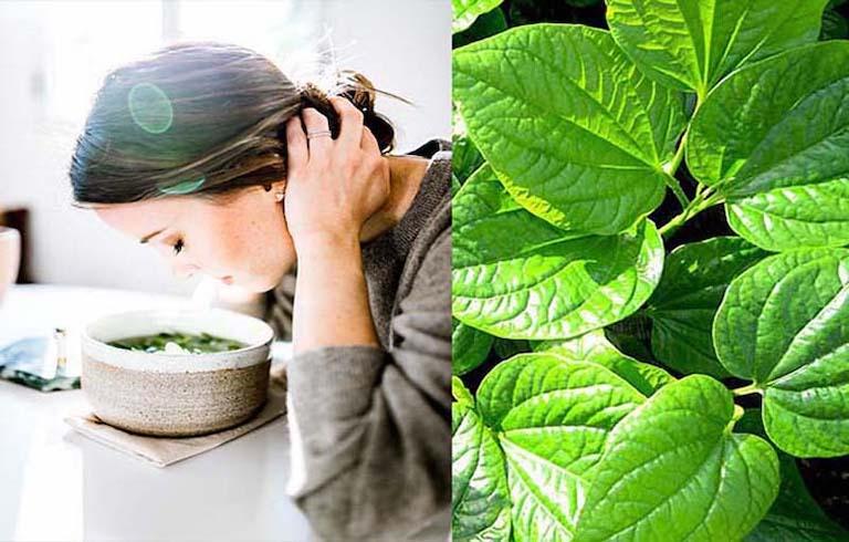 Xông mũi với lá lốt giúp kháng viêm, diệt khuẩn và giảm dịch xoang đáng kể