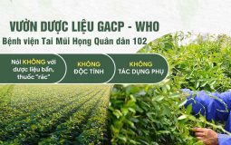 Vườn dược liệu đạt chuẩn GACP-WHO của Bệnh viện Tai Mũi Họng Quân dân 102