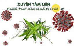 """Xuyên tâm liên - Vị thuốc """"Vàng"""" giúp phòng ngừa và điều trị bệnh viêm đường hô hấp COVID - 19"""